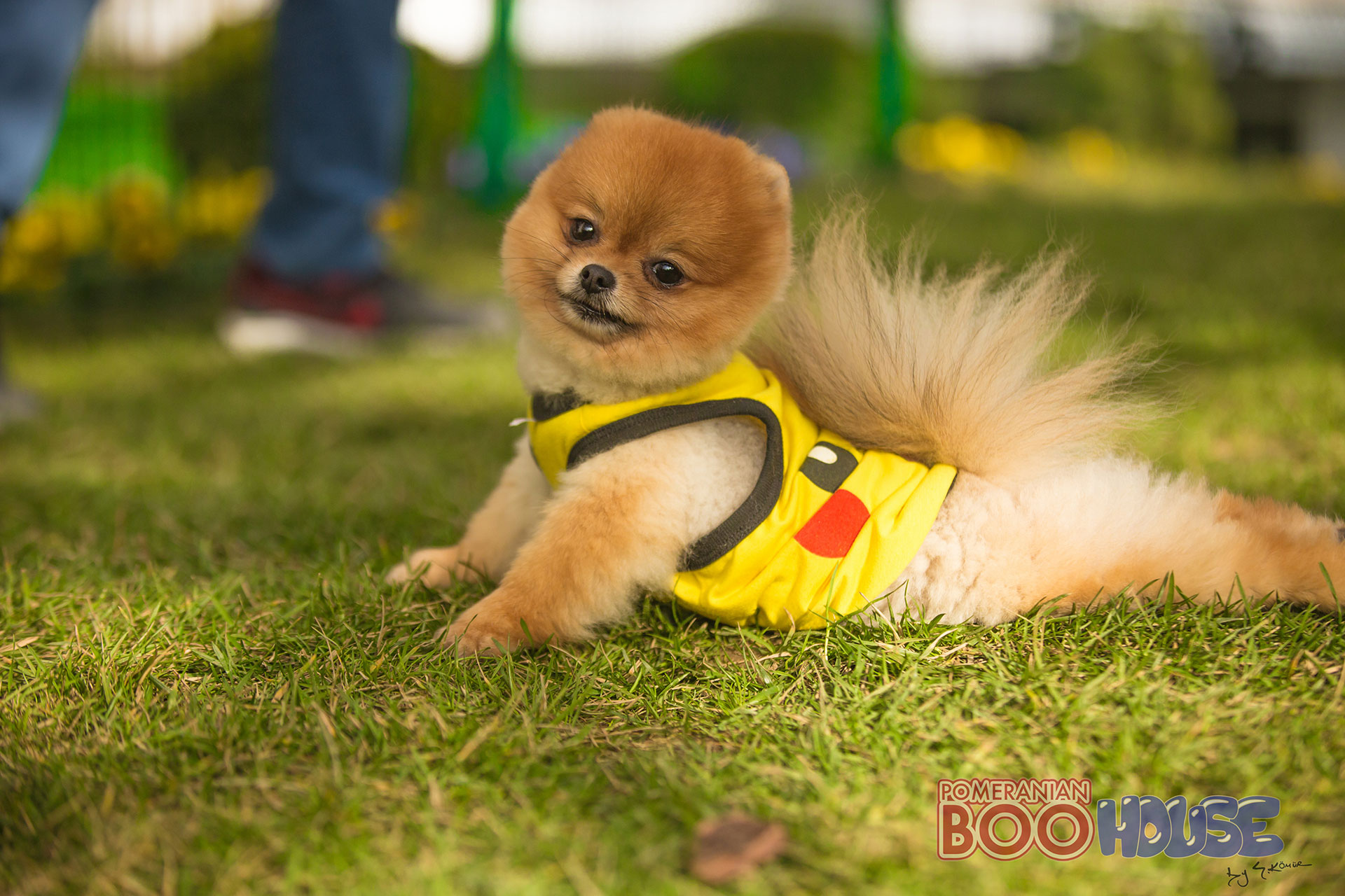 Cute Dog Boo Wallpapers Hd Wallpapers Boo Template Pumpkin